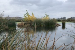 Lisa_Damerel_Moorhen_Marsh_in_Martinez-d26f621f45d9074fabdc78085599191c