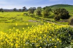 2019 03 31 Lime Ridge Wildflowers